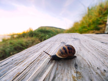 Wide Angle View Of Snail On Wo...