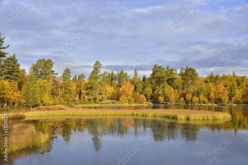 Fotobehang Ree Rogen Naturreservat in Schweden