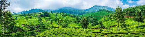 Panoramiczne piękne herbaciane plantacje w wzgórzach blisko Munnar, Kerala, India.