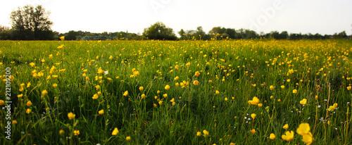 Tuinposter Weide, Moeras Buttercups