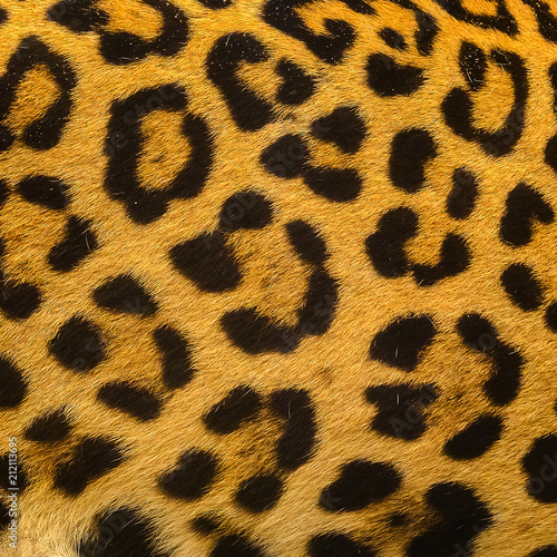 In de dag Luipaard Close up leopard spot pattern texture background