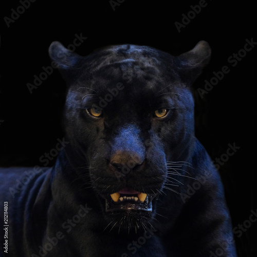 Foto op Canvas Panter black panther shot close up with black background