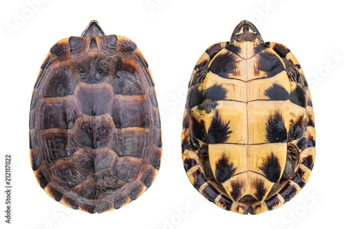 Poster Tortue Top view small turtle both side isolated on white