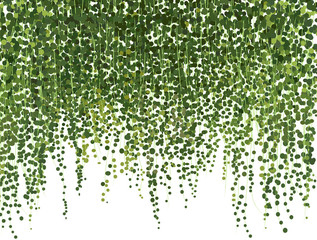 Fototapeta Eko climbing wall of ivy. vector illustration on white background. banner and web background.