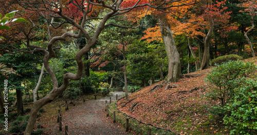 Poster Asia land Japanese garden in Tokyo