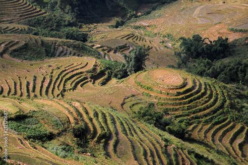 In de dag Rijstvelden SaPa rice terrace field in Vietnam