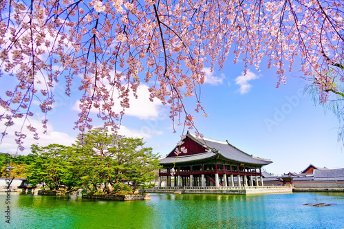 View of the beautiful cherry blossoms next to a lake at the Gyeongbok Palace in spring in Seoul, South Korea.
