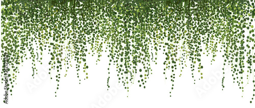 Plakaty zielone  climbing-wall-of-ivy-vector-illustration-on-white-background-banner-and-web-background