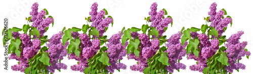 Foto op Canvas Lilac Row of bouquets of purple lilacs on a white background.