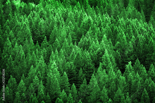 Pine Forest in Wilderness Mountains Canvas Print