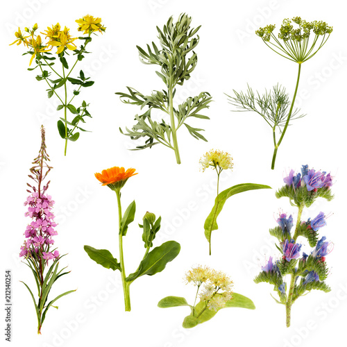 Set of herbs isolated on white background. Plants are used in medecine, with their help treat various diseases both in humans and animals, also added to tea Wall mural