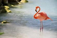 1 Flamingo Dozing
