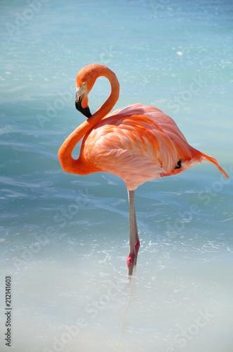 Foto op Aluminium Flamingo like a flamingo