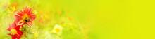 Sommer Panorama  -  Hummel Auf Dahlienblüte