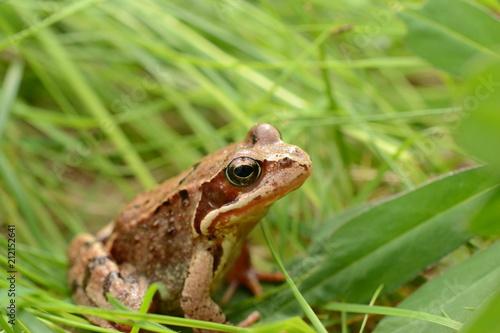 Keuken foto achterwand Kikker Frog