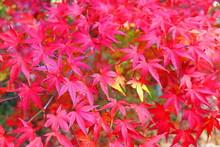 湖畔の秋の風景13