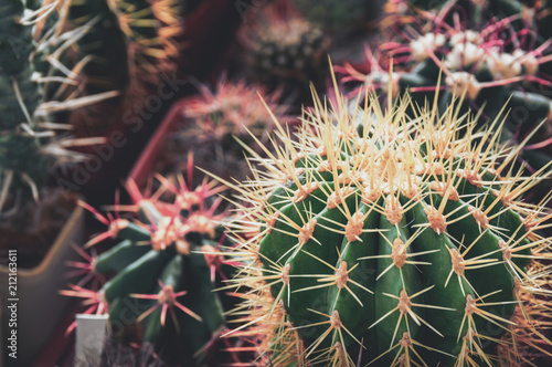 Foto op Aluminium Cactus Collection of cacti with spines. Cactus plants High Angle View.