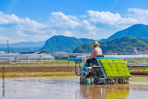 Foto  静岡県伊豆の国市 初夏の田植え風景