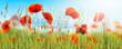 canvas print picture - idyllische mohnblumenwiese panorama