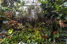 Beautiful Plants In Domain Wintergardens, Auckland, New Zealand