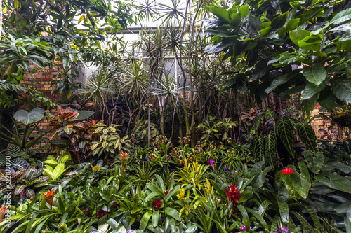 Beautiful plants in Domain Wintergardens, Auckland, New Zealand Canvas-taulu