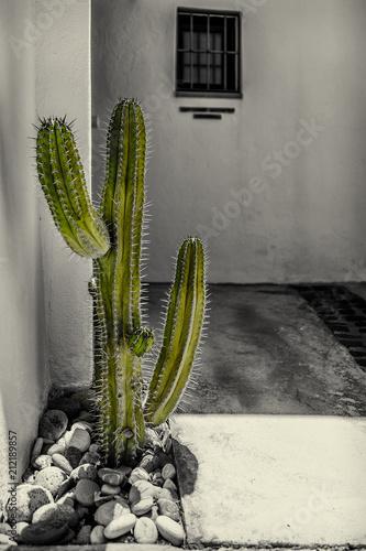 Foto op Canvas Cactus Cuidado que pincha