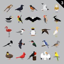 Various Birds Cartoon Vector Illustration 3
