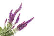 bouquet of purple wild flowers on a white background, the conception of medicinal plants