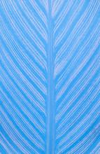 Blue Leaf Detail