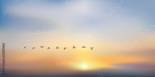 Photo  coucher de soleil - soleil couchant - lever de soleil - vol de canard - fond - c