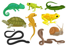 Reptile And Amphibian Set, Chameleon, Frog, Turtle, Lizard,gecko, Triton Vector Illustration On A White Background