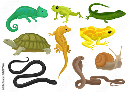 Photo Reptile and amphibian set, chameleon, frog, turtle, lizard,gecko, triton vector
