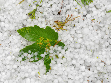 Hail On The Ground After Hails...