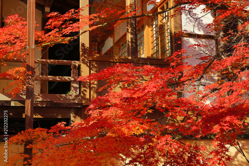 Photo  red japanese maple autumn fall