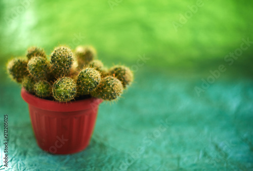 Foto op Aluminium Cactus Cacti in pots on a green background