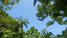 BOTTOM UP: Tall Palm Tree Cano...