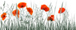rote mohnblumen monochrome wiese