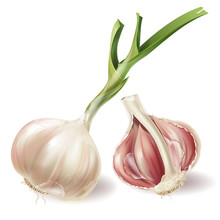 Vector Set With Sprouted Head Of Garlic And Half Of Bulb In Peels, Isolated On White Background. Natural Organic Vegetable, Agricultural Root Crop, Spicy Condiment, Ingredient For Eating And Cooking