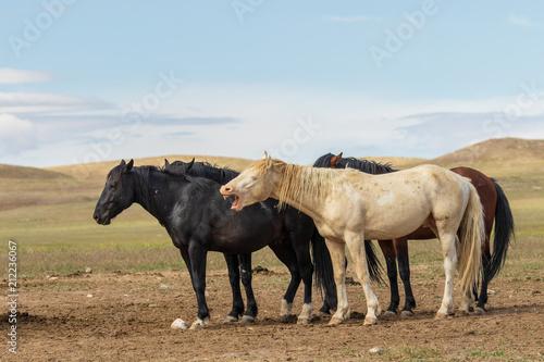 Wild Horses in Summer in Utah