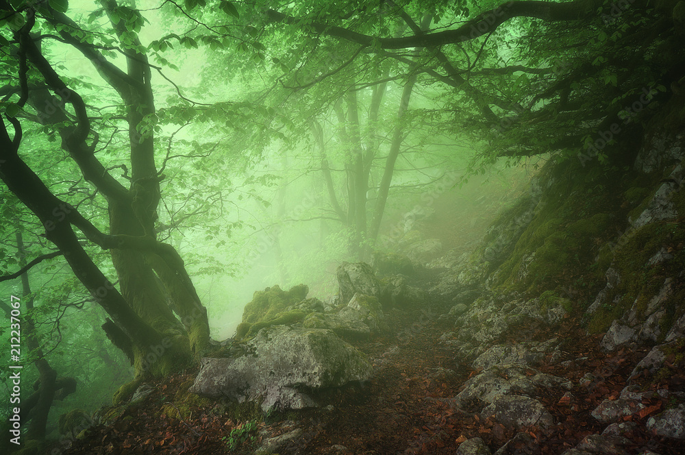 Fototapeta Path in mysterious forest