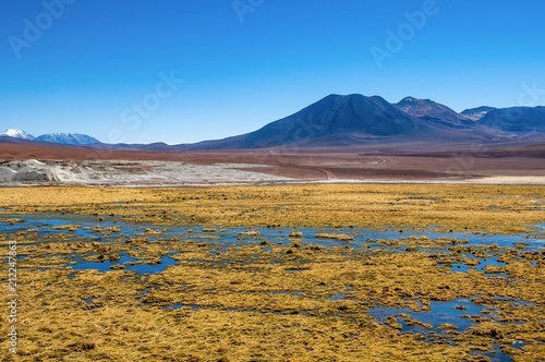 Cuadros en Lienzo A wetland in front of snow capped volcanoes at Atacama desert, northern Chile