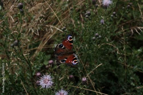 Türaufkleber Darknightsky Fluss Tal mit grüner Natur und Schmetterling
