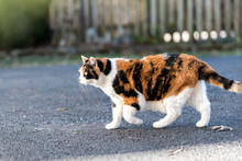 One Calico Cat Outside Hunting...
