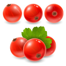 Red Currant Set