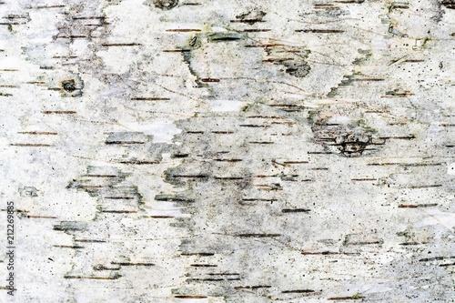 Fototapeta gray texture of a damp birch bark, abstract background obraz