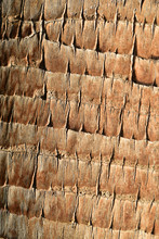 Palm Tree Trunk Bark Texture Close Detail Pattern Background