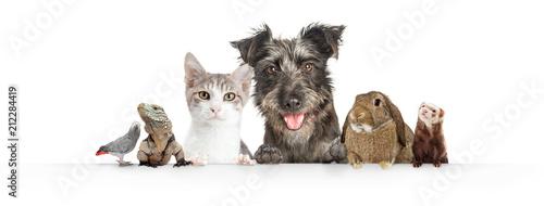Fotografering  Domestic Pets Hanging Over White Website Banner