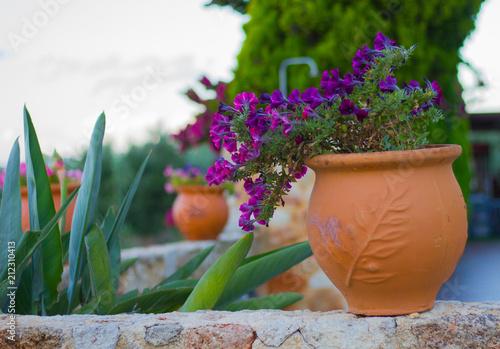 Kwiat w terakotowej donicy - fototapety na wymiar