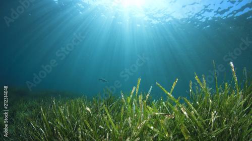 Seagrass underwater ocean background