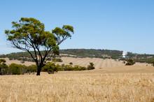Harvested Wheat Fields - Austr...